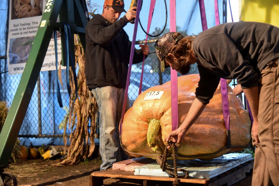 Members of the Durham Fair giant pumpkin committee help move the giant pumpkin entries on and off a scale to be judged and weighed on Tuesday, Sept. 25, 2018, on the Durham Fairgrounds. The pumpkins will be available for viewing all weekend during the fair. | Bailey Wright, Record-Journal