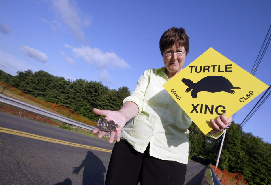 WALLINGFORD, Connecticut - Wednesday, July 1, 2009 - State Rep Mary Mushinsky stands on Whirlwind Hill Road where it crosses over Mackenzie Reservoir on Wednesday, July 1. The area is a prime breeding ground for Box, Painted and Wood Turtles, and many of them have become road kill. She holds a Painted Turtle that was hit by a vehicle on the road, and a sign sponsored by CL&P and the Quinnipiac River Watershed Association that will be posted in the area as well as other locations where the turtles are abundant. Rob Beecher / Record-Journal