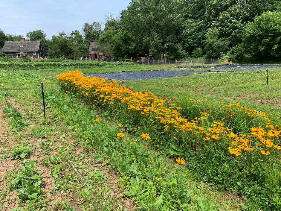 A flowerbed at Leaning Oak Farms on Maiden Lane in Durham.