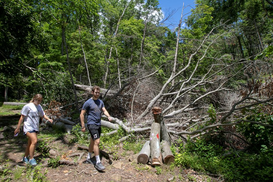 Quinnipiac University students Oscar Evans and Julia Corrice walk by fallen trees cleared away from trails at Sleeping Giant State Park in Hamden, Fri., June 14, 2019. The park has opened a year after a tornado ravaged the landscape. Dave Zajac, Record-Journal