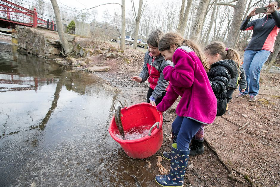 Left to right, Lilly Swistak, 8, Mia Francoeur, 9, and Brielle Francoeur, 4, all of Meriden, back away as a large trout tries to jump out of their bucket during the annual fish stocking at Red Bridge in Meriden, Thursday, April 12, 2018. Dave Zajac, Record-Journal