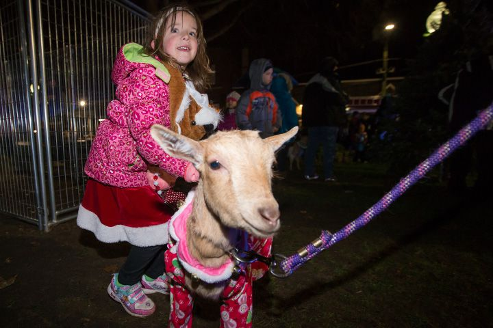 "Willa Chmura, 6, of Southington pets ""Petunia"" Friday during White Christmas in the Community in Southington. Dec. 2, 2016 