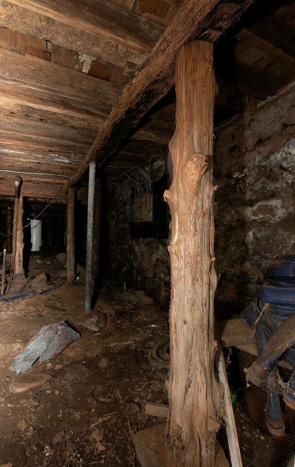 Cedar tree supports in the basement of the Nathaniel Ives house at 257 Fenn Rd. in Cheshire, Monday, Oct. 8, 2018. Local developer John Ricci is owner of the house built around 1749 and is considering how to develop the 50-acre property. Dave Zajac, Record-Journal