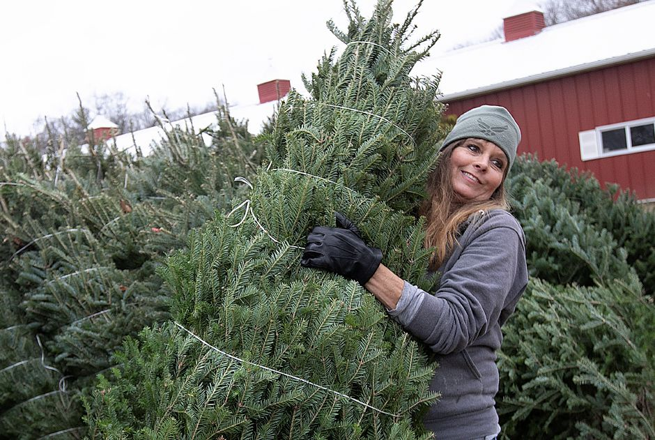 Dawn Cestaro, owner of Cheshire Hollow Farm, on Monday sets out one of a variety of Christmas trees available at the family farm on Peck Lane in Cheshire. For more photos, visit us online at www.myrecordjournal.com.Dave Zajac, Record-Journal