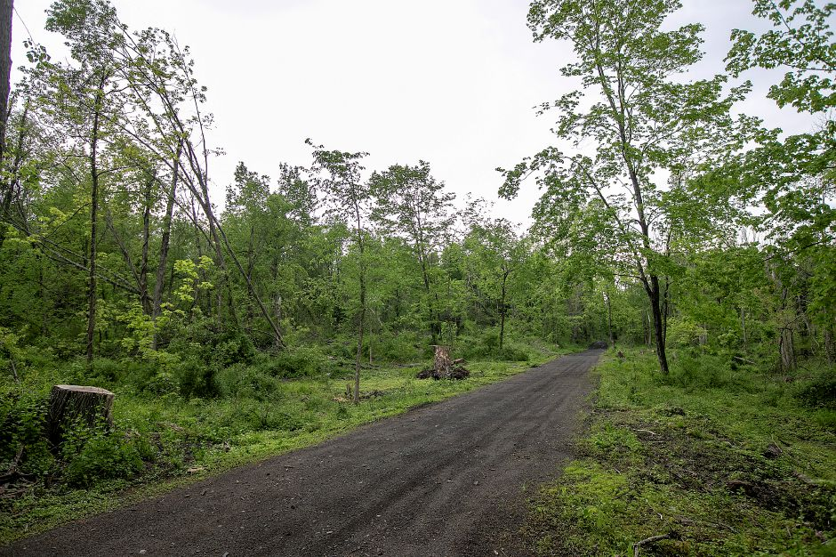 A cleared section of the Tyler Mill Preserve where many trees fell during last year