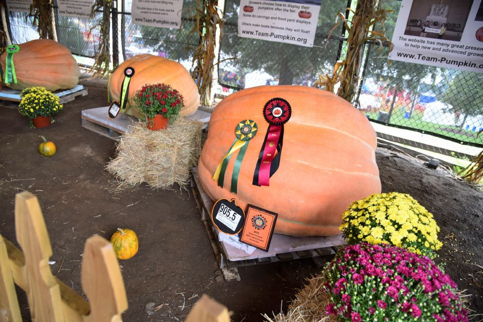 One of the winning giant pumpkins at the Durham Fair on Friday, Sept. 28, 2018. | Bailey Wright, Record-Journal