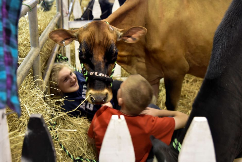Micayla Schramm (left), 15, of Stonington, and Lennon Rodgers, 12, of Rhode Island, in the pen with cows at the Durham Fair on Friday, Sept. 28, 2018. | Bailey Wright, Record-Journal