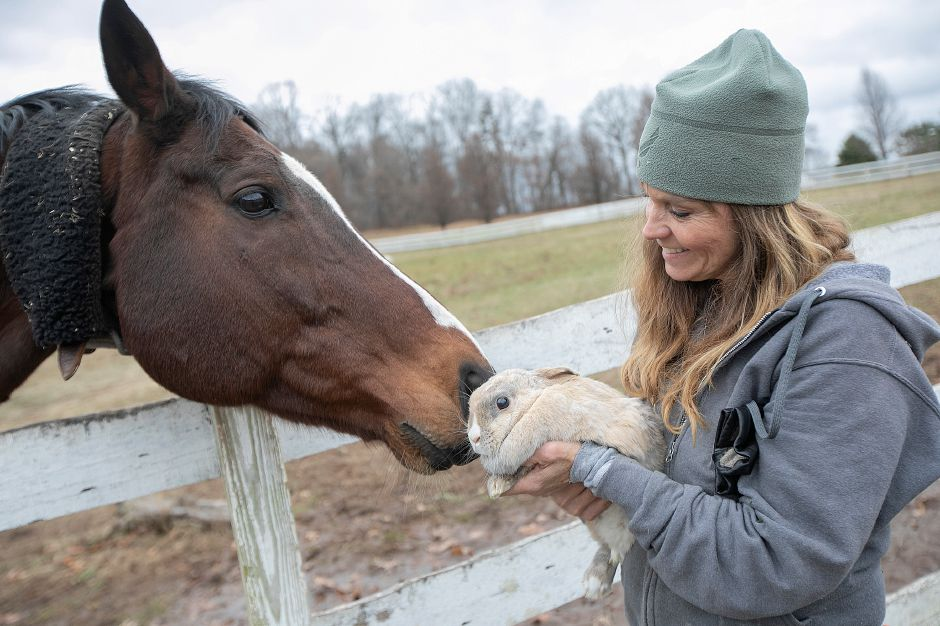 "Thoroughbred ""Marky"" greets rabbit ""Jessica"" held by Dawn Cestaro, owner of Cheshire Hollow Farm on Peck Lane in Cheshire, Mon. Nov. 26, 2018. The 100-acre farm hosts a petting zoo and sells a variety of Christmas trees. Dave Zajac, Record-Journal"