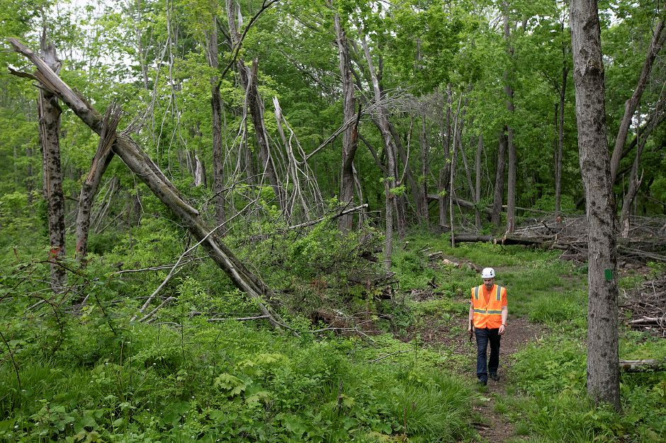 Erik Severson, of Wallingford, a Conservation Commission volunteer, walks next to the hardest hit area of Tyler Mill Preserve after last year