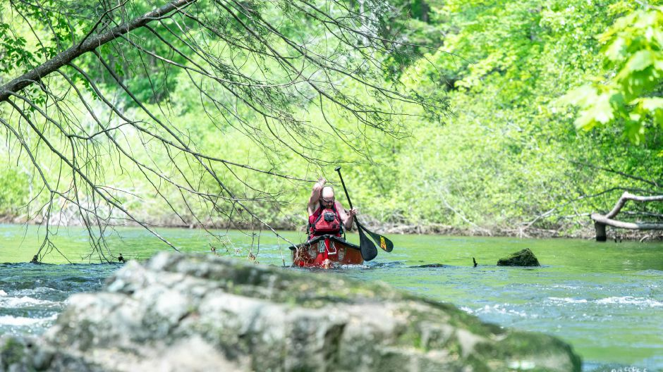 Canoe paddlers go under low branches in the Quinnipiac Downriver Classic race on May 19, 2019. The yearly kayak and canoe race attracted 35 participants this year, going from the Meriden-Waterbury Turnpike to the Red Bridge on Oregon Road in Meriden. Devin Leith-Yessian/Record-Journal