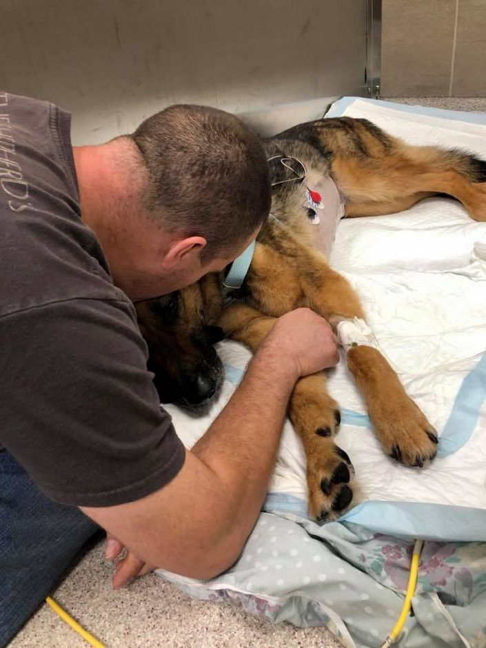 Meriden Police Officer David Buck comforts K-9 Anouke following her recent abdominal surgery. Courtesy MPD
