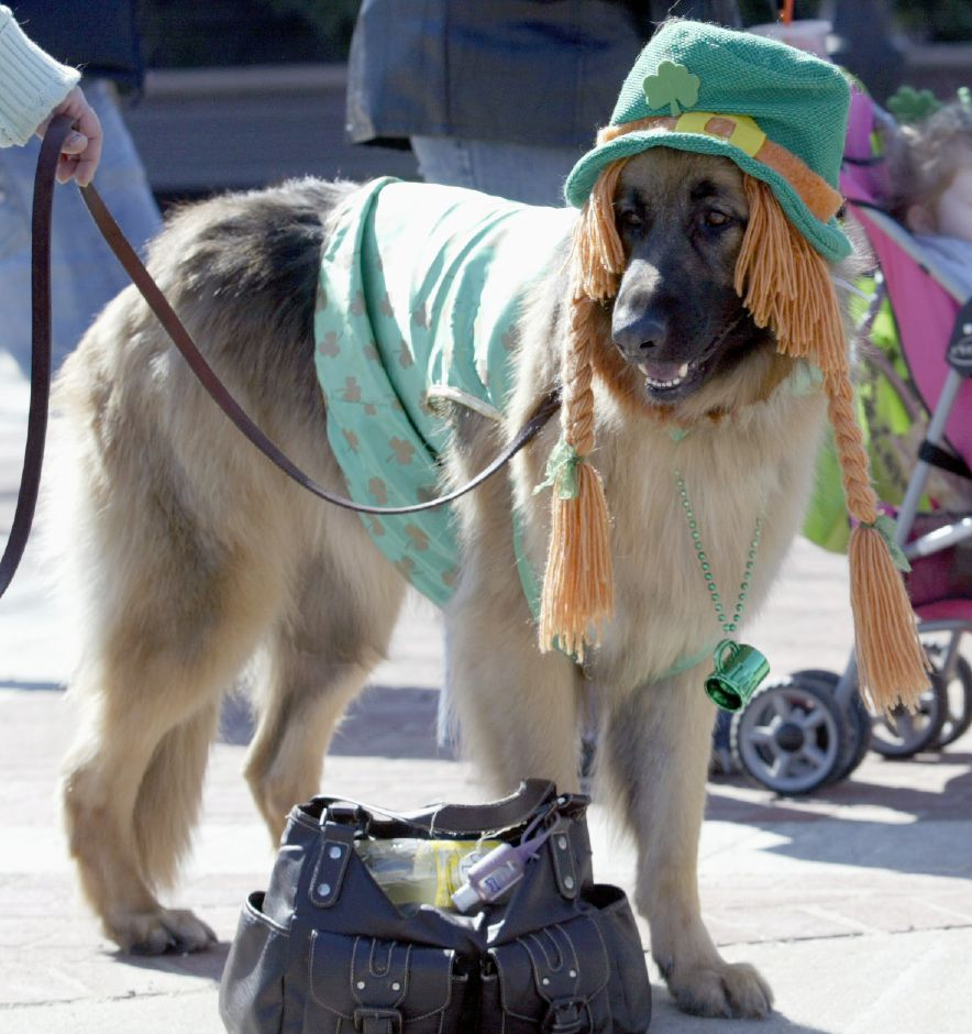 MERIDEN, Connecticut - Saturday, March 21, 2009 - A dog is shown in St. Patty