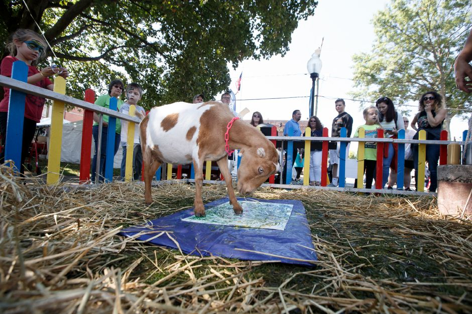 "Bradley Mountain Farms ""Rosebud"" works on her painting Saturday during the Southington Apple Harvest Festival in Southington September 29, 2018 