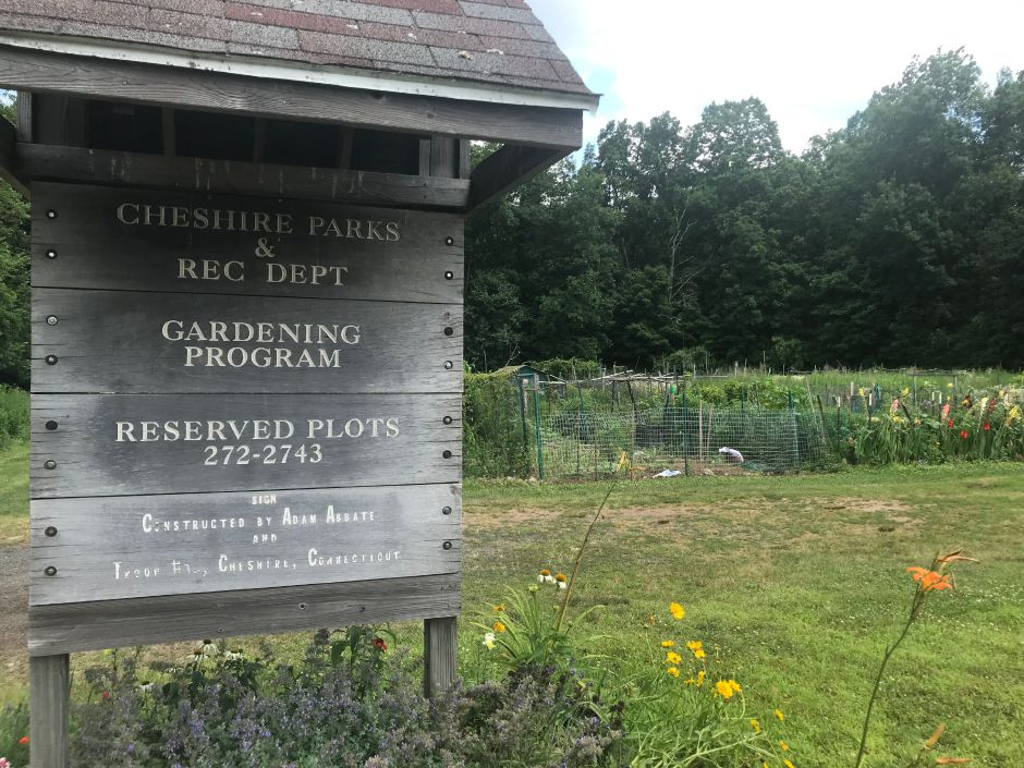 The Cheshire Community Gardens, located at Bartlem Park. (Michael Torelli/Cheshire Herald)