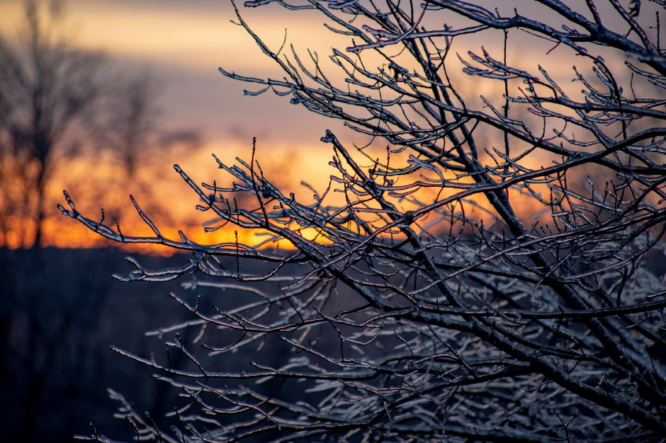 The sun sets behind a group of tree branches covered in ice in Meriden Jan. 22, 2019. | Richie Rathsack, Record-Journal