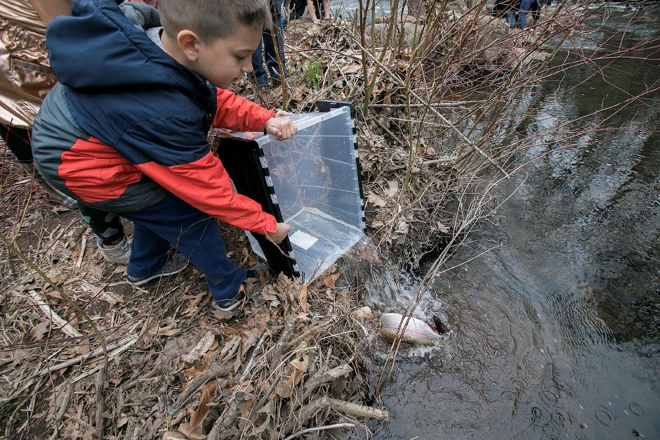 Randy Peterson, 7, of Wallingford, helps release one of several rainbow trout during the annual fish stocking along the Quinnipiac River near Red Bridge in Meriden, Thursday, April 12, 2018. Dave Zajac, Record-Journal