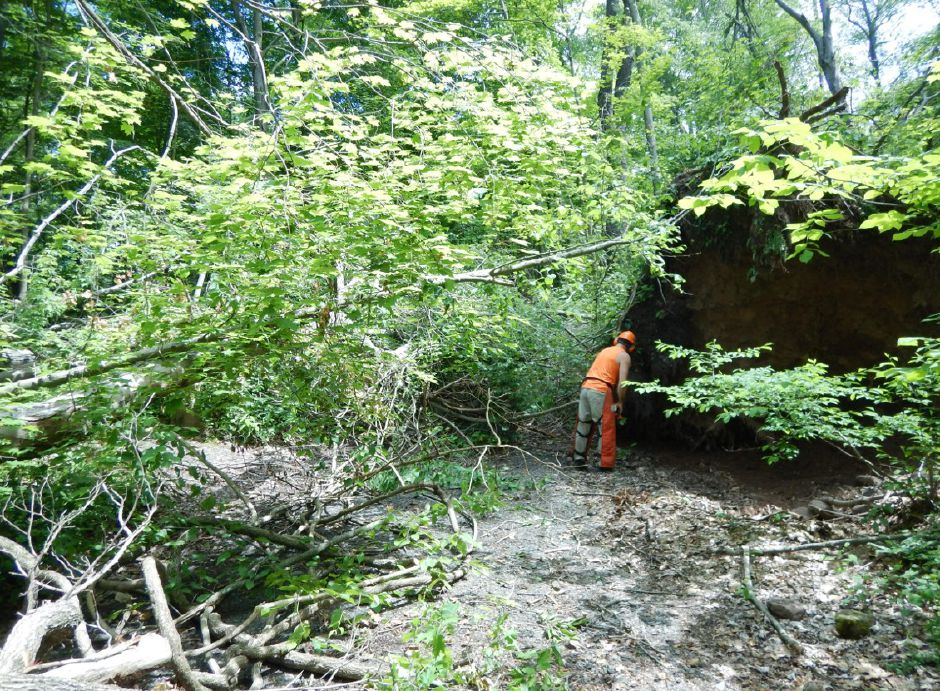 Clearing an access path at Tyler Mill Preserve. Courtesy of Dianne Saunders.