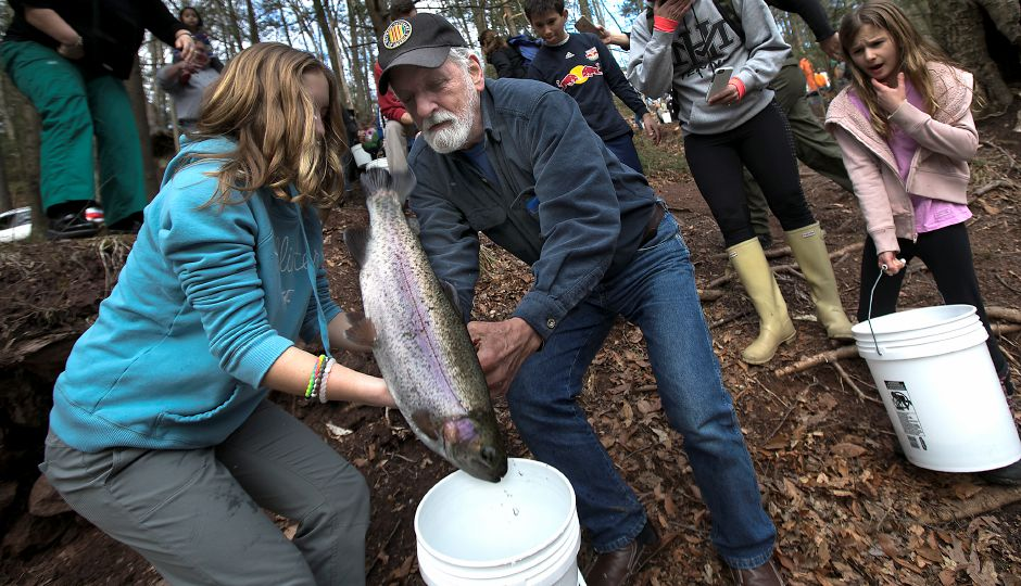 A large trout flips out of the hands of Evelyn Lewis, 12, of Southington and Duke Millican, of Wallingford, during the annual fish stocking along the Quinnipiac River Gorge Trail in Meriden, Wednesday, April 5, 2017. | Dave Zajac, Record-Journal