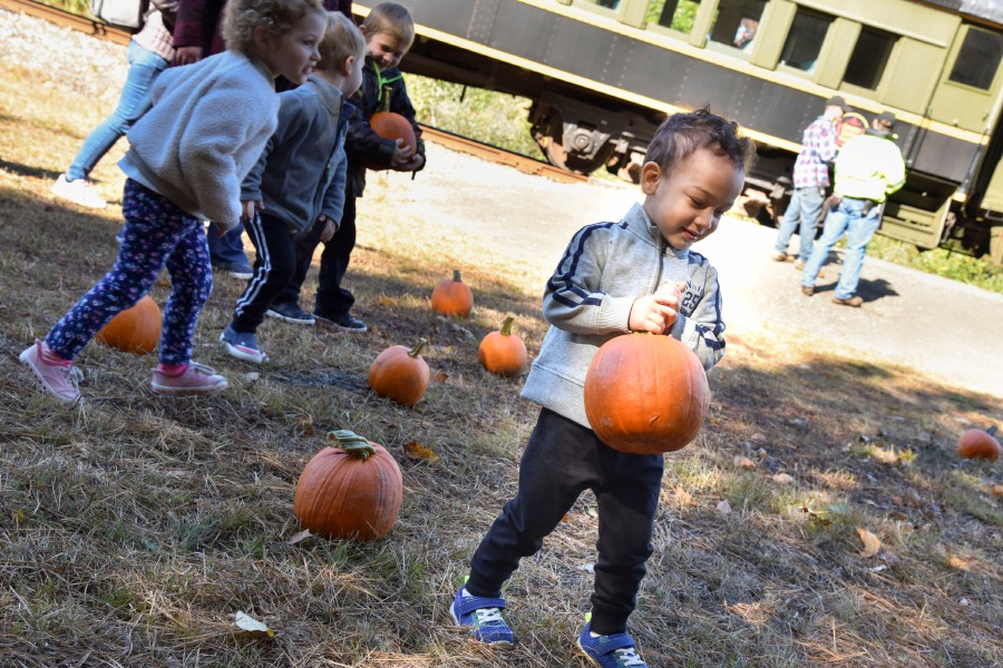 Silas Madden, 3, of Waterbury, picks out a pumpkin during a Naugatuck Railroad ride through Thomaston on Saturday. The train included a stop at a private pumpkin patch.