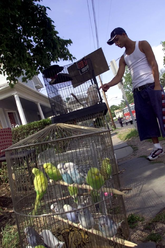German Zapata plays with a Mulucan on Broad Street in Meriden June 21, 2000. Zapata was watching over the many birds including the mulucan and many parakeets.