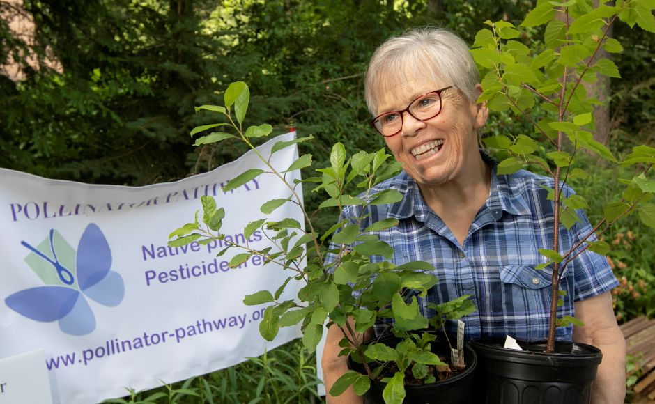 Shari Guarino, Southington Land Trust treasurer, holds a chokeberry shrub, left, and gray birch tree, one of several that will be planted near the Milldale Train Depot along the Farmington Canal Heritage Trail, Wed., Jun. 10, 2020. Conservationists are working to promote pollinator pathways despite the cancellation of a kick-off event planned for this spring. Dave Zajac, Record-Journal