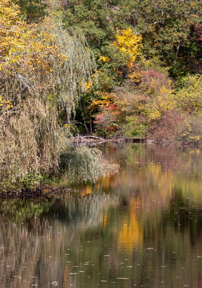Changing foliage along the Quinnipiac River on Oct. 13, 2019. | Devin Leith-Yessian/Record-Journal