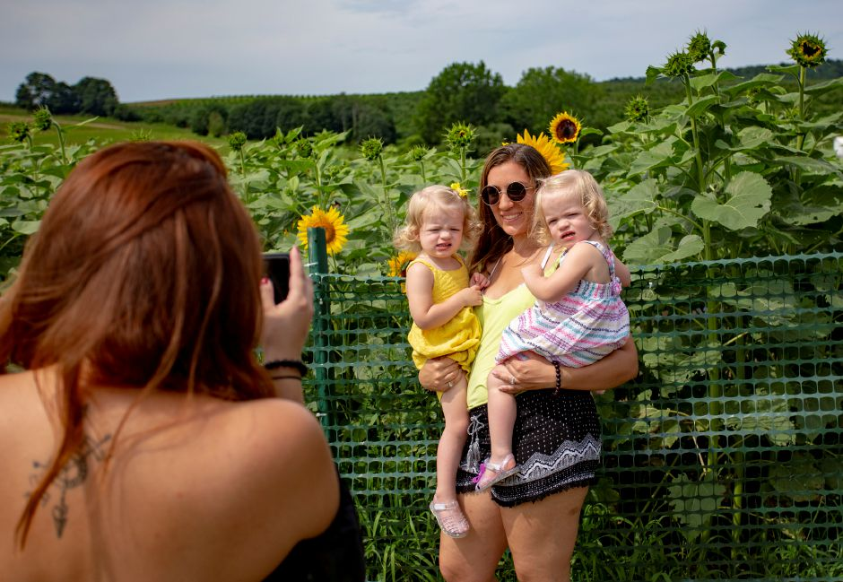 Linda Cardona of Wallingford takes a picture of Madison Milum, who is holding her daughters Annabelle, left, and Clara, right, both 2 years, at the Lyman Orchards Sunflower Maze July 30, 2018. | Richie Rathsack, Record-Journal