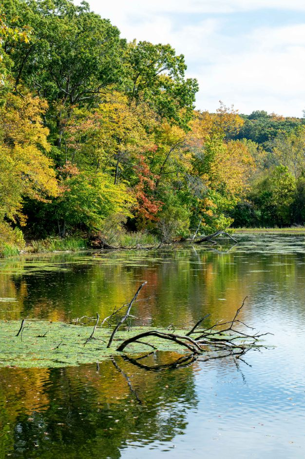 Changing foliage along Hanover Pond in Meriden on Oct. 13, 2019. | Devin Leith-Yessian/Record-Journal